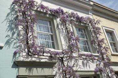 藤の花と家.jpg